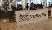 vinifera10