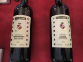 vinifera31