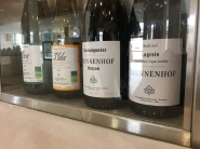 vinifera34