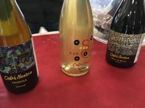 vinifera7
