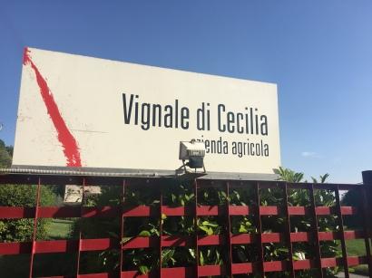 vignaledicecilia_9