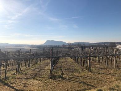 gentili vini bardolino - 10