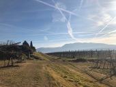 gentili vini bardolino - 11