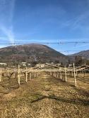 gentili vini bardolino - 12
