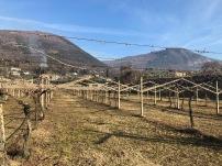 gentili vini bardolino - 13