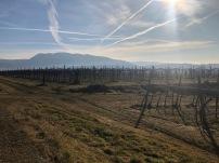gentili vini bardolino - 14