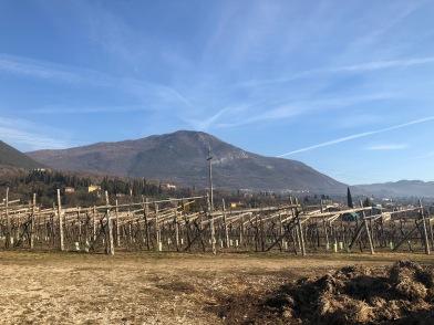 gentili vini bardolino - 15
