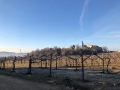 gentili vini bardolino - 3