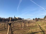 gentili vini bardolino - 4