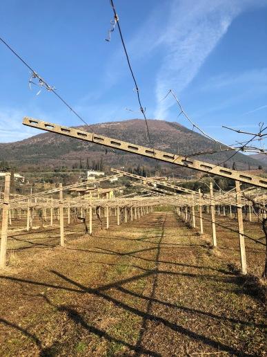 gentili vini bardolino - 6