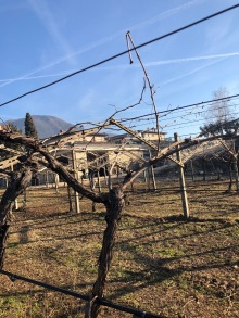 gentili vini bardolino - 7