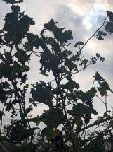 Corvezzo_Winery_foglie (24)